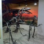MUPE museo paleontológico de elche